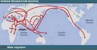 Migration_pattern_1